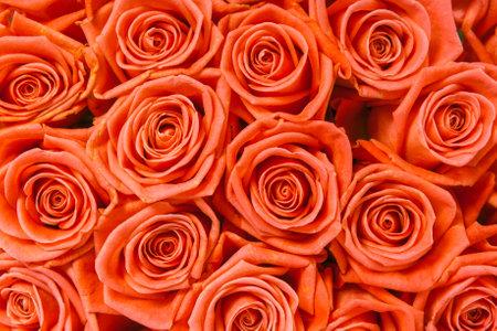 오렌지 장미 배경의 무리
