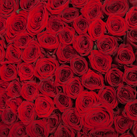 Natural red roses background texture