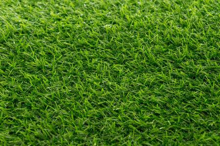 Green grass texture background pattern. Stock Photo