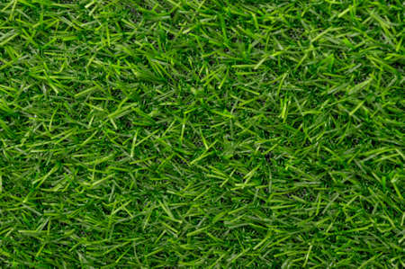 Green grass texture background pattern