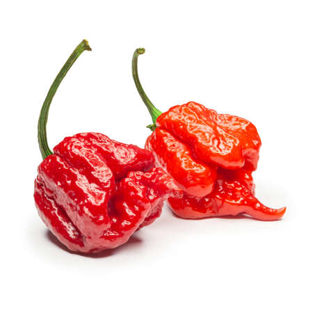 Carolina Reaper, the hottest chile pepper (Capsicum chinense ), whole ripe pod, isolated on white background. Superhot or extremely hot chile pepper Stock Photo