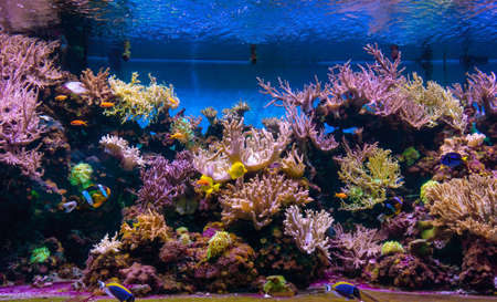 Animals of the underwater sea world. Ecosystem. Colorful tropical fish. Life in the coral reef 版權商用圖片