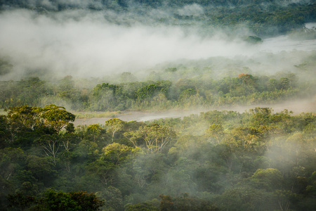 The Morning rain forest in Amazonic jungle, Ecuador Imagens