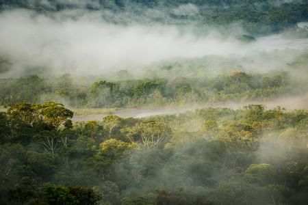 The Morning rain forest in Amazonic jungle, Ecuador Banco de Imagens