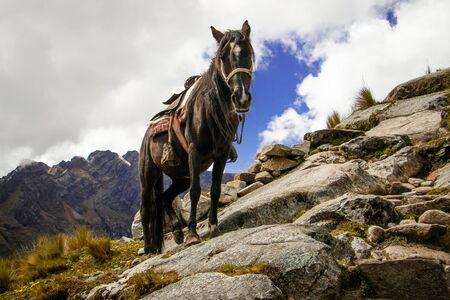 Horse struggeling with difficult terrain in Santa Cruz Trek, Peru