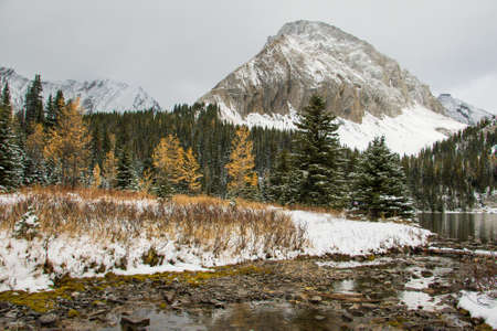 larch tree: Chester lake at Kananaskis Country in autumn colors with first snow Stock Photo