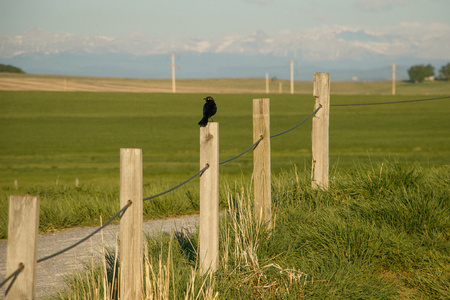 Quiet morning in countryside of Southern Alberta, Canada, birds sound in field