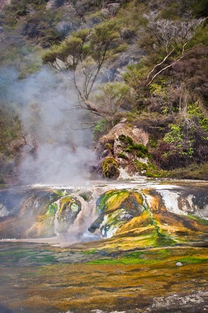 Colorful little travertin terrace in Waimangu valley in New Zealand, Rotorua geothermal area in New Zealand, hot springs tourism, volcanic adventure in Australasia