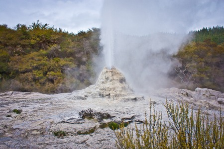 White geyser in geothermal park in New Zealand, volcanic activity