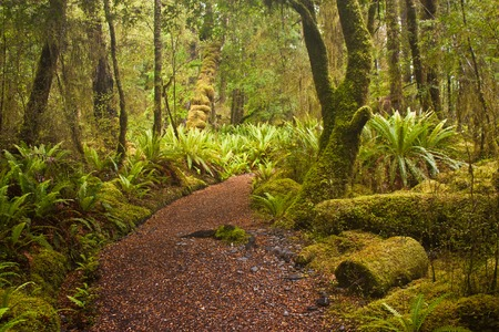 Beginning of Kepler track in fern forest in New Zealand, one of the Great Walks according Lonely Planet guide book, green fern everywhere as national plant of New Zealand