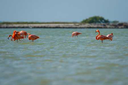 Group of pink flamingos in Las Coloradas in Mexico, famous birdwatching spot in Yucatan peninsula in Mexico Reklamní fotografie