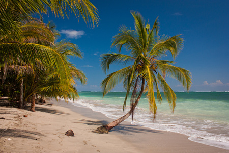Costarican paradise of Cahuita National Park, lonely palm tree on white beach of Costarica, the picture for travel magazine or journal, blue sunny sky and sea, the best relaxing vacation