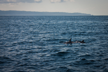 Two dolphins in Pacific ocean near Costarica