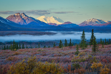 Foggy morning in Denali national park in Alaska, number one tourist destination, fall season colors