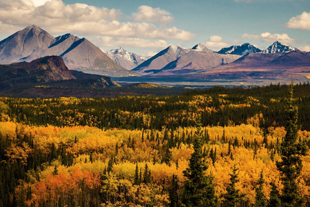 Autumn colors in Denali state and national park in Alaska, mountain range view, fall season in far north destionation of US