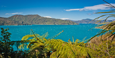 Panoramatic view of ocean from Queen Charlotte track on the north of South Island of New Zealand, beautiful turquoise blue water and sky in summer time in NZ