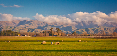 Green hills in countryside of Malborough region in New Zealand, farmland around town of Blenheim in South Island of NZ, sheeps in mountain valley Reklamní fotografie