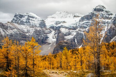 Autumn in Canadian Rockies with beautiful views of yellow larches