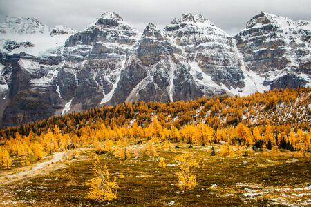 Larch valley in Lake Louise in Banff national park, Canada