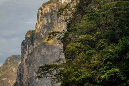 Fresh green vegetation of mexican rainforest in Sumidero canynon, Chiapas, subtropical range of Earth