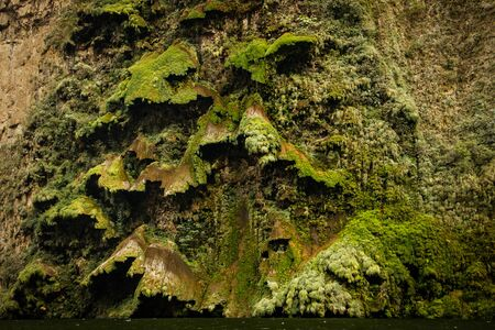 Big green Moss in Sumidero canyon as sample of subtropical mexican vegetation, rainforest in Mexico, Chiapas must see place Reklamní fotografie
