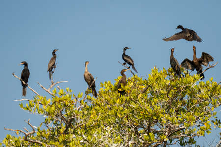 Anhinga sitting on the tree on the banch of lake in Oaxaca state of Mexico, southern part of mexico as birdlovers paradise