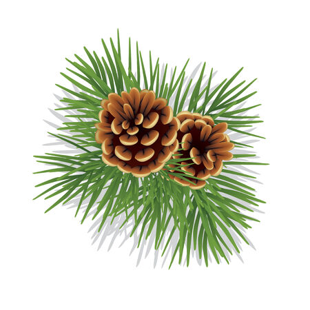 Pine branch with cones isolated on white Vector