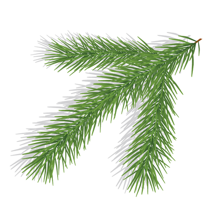 pine branch: Pine branch isolated on white Illustration