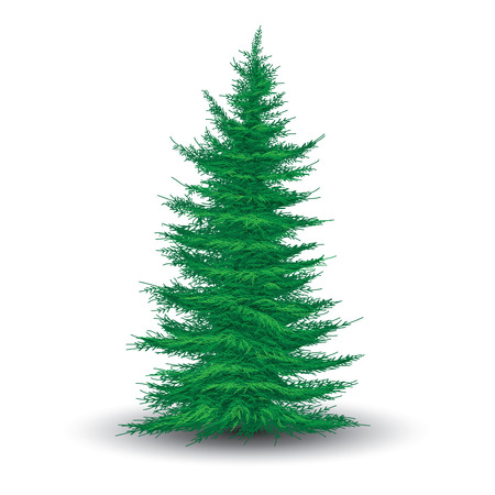 Green fir tree isolated on white. Realistic vector illustration