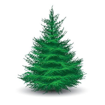 Árbol de abeto verde aislado en blanco. Ilustración vectorial realista
