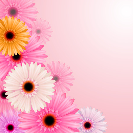 gerber flowers: Gerber flowers isolated on pink background. Vector illustration Illustration