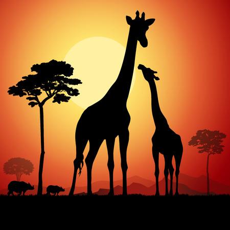 jirafa: Jirafas en la sabana africana. Ilustración vectorial