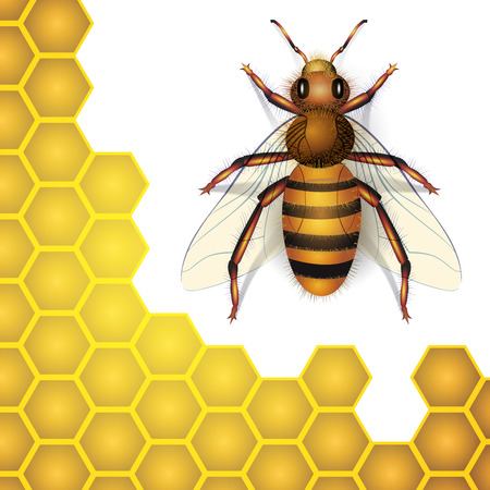 closeup: Bee and honey cells isolated on background. Vector illustration