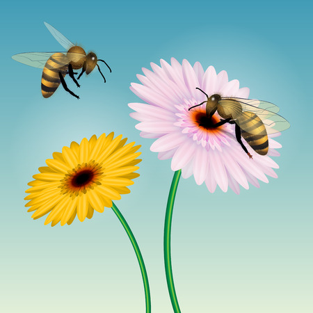 nectar: Honey bee collecting nectar on a flower. Isolated on white. Vector illustration