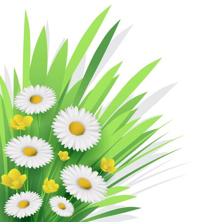 white daisy: White daisy flower and grass for nature background. Vector illustration