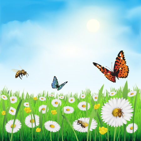 colorful butterfly: Spring flowers in a meadow. Vector illustration