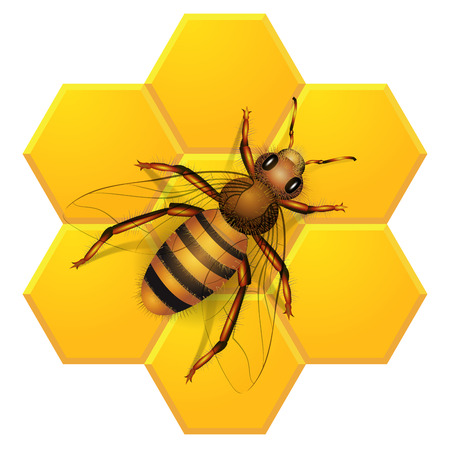 mead: Bee isolated on honeycombs background. Vector illustration