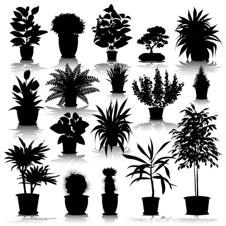 Set of different plants and flowers growing in pots. Vector illustration 向量圖像