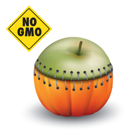 genetically modified crops: Piece of an apple and pumpkin together as a result genetic engineering. Vector illustration Illustration