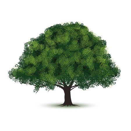 緑の木は、白い背景で隔離。ベクトル図  イラスト・ベクター素材