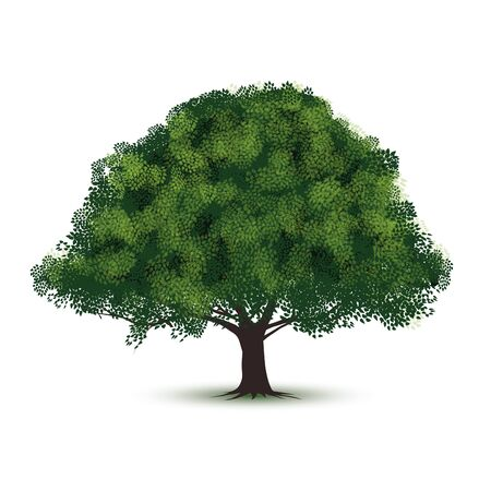 Green tree isolated on white background. Vector illustration