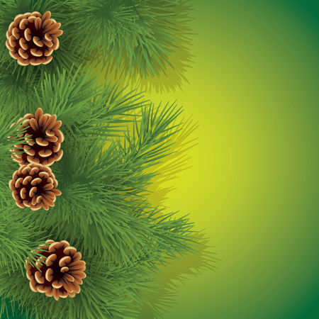 pine branch: Pine branch and cones isolated on background. Vector illustration
