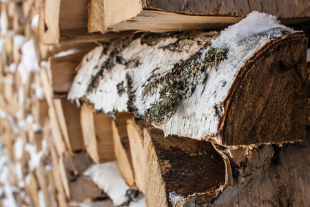 woodpile: Birch logs are stacked in woodpile