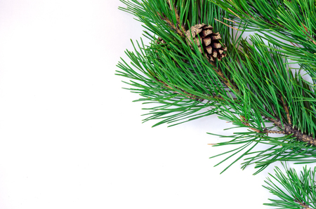 Green pine branches with cones on a white background Stock Photo