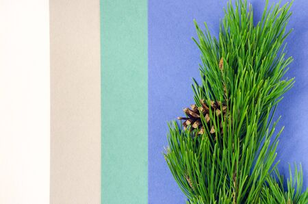 Pine branch on the different colors paper background