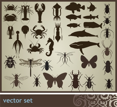 squid: Vector set