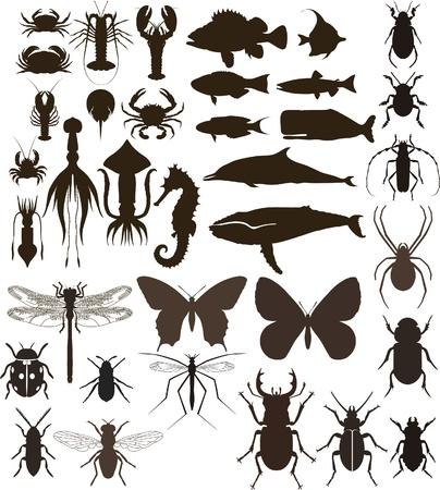 calamar: Animales establece Vectores