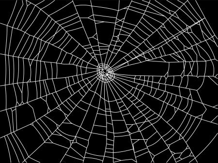 arachnophobia: spider web