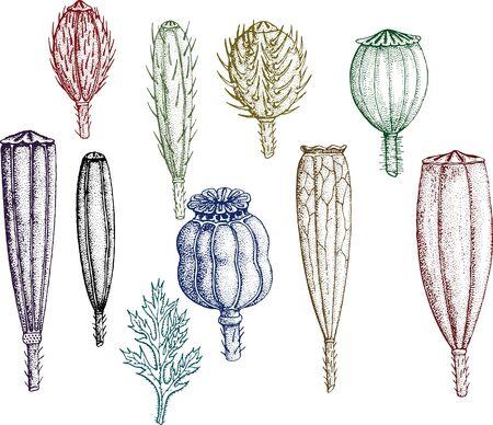 腰、イラスト、葉、自然、植物、種子、とげ、ツリー、ベクトル、野菜