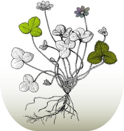 four leafed clover: ilustration of flowers Illustration